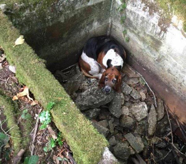 В Индии инженер с помощью дрона спас щенка из канавы