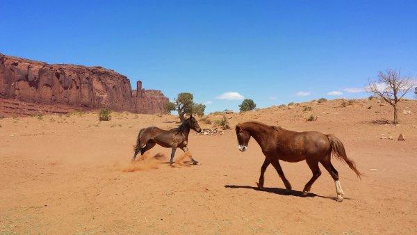 Почти 200 диких лошадей погибли в Аризоне в связи с засухой