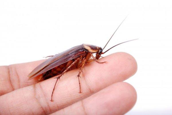 Жительница Флориды рассказала о длительной борьбе с тараканом в ухе
