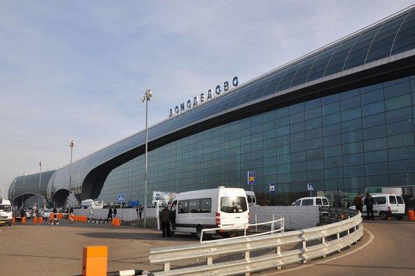 В Москву на борту из Бразилии прилетел труп собаки