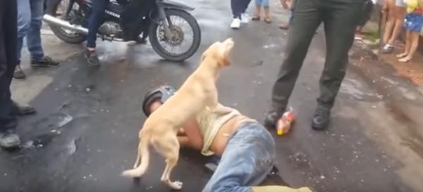 Верный пес защитил своего пьяного хозяина от прохожих и полицейских