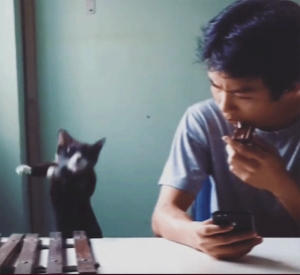 Кошка-музыкант, играющая на ксилофоне, взорвала интернет