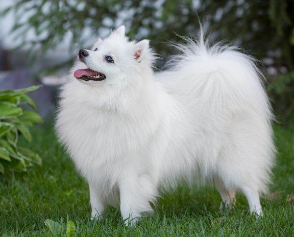 Женщина спустя год жизни с собакой узнала, что это лисица