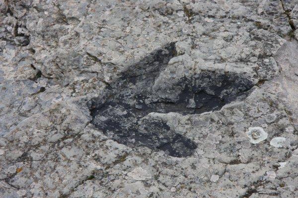 В США вандалы выбросили окаменелые следы динозавров в озеро