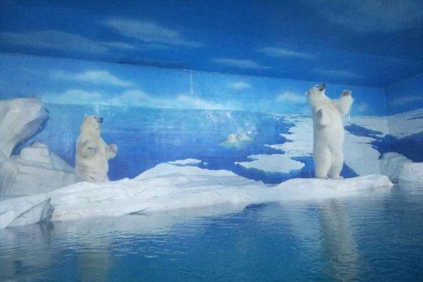 National Geographic рассказал, что случилось с самым грустным полярным медведем