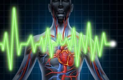 Ученые рассказали, что происходит с организмом после остановки сердца