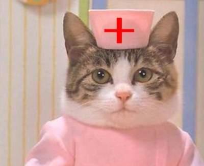 Врачи рассказали об особенностях лечения при помощи кошек