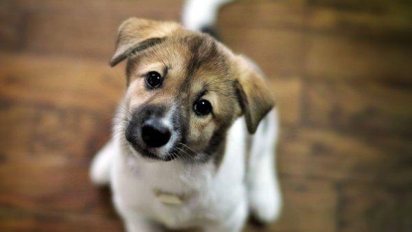 200 бездомных щенков из Чернобыля найдут приют в США