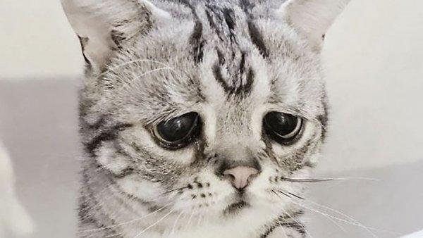 Самый грустный кот в мире обрёл своё счастье
