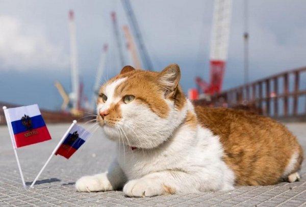 Американцев поразил кот, «затмивший» Путина на Крымском мосту