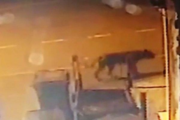 В Бирмингеме львица вышла на улицу и стала в мусорном баке искать еду
