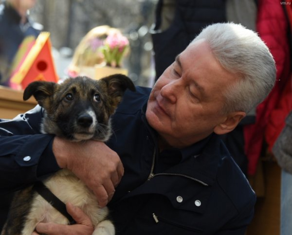 Собянин поблагодарил жителей столицы, которым не безразлична судьба бездомных животных из приютов