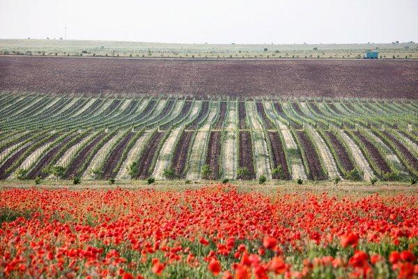 Впервые за 50 лет крымское вино оценили наградами в Лондоне