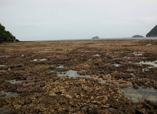 Загадочная аномалия: В Таиланде вода отошла на два километра от берега