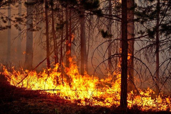 В Калифорнии ввели режим ЧС из-за лесных пожаров