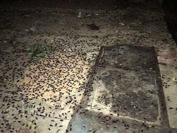 В Казани люди жалуются на нашествие тараканов