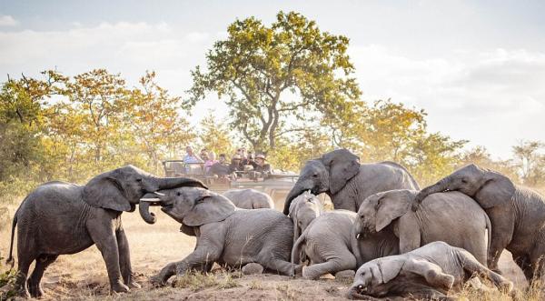 Слоны национального парка Африки удивили туристов забавными играми