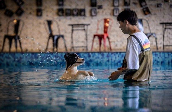 В Китае мужчина потратил 335 тысяч фунтов стерлингов на особняк для собаки