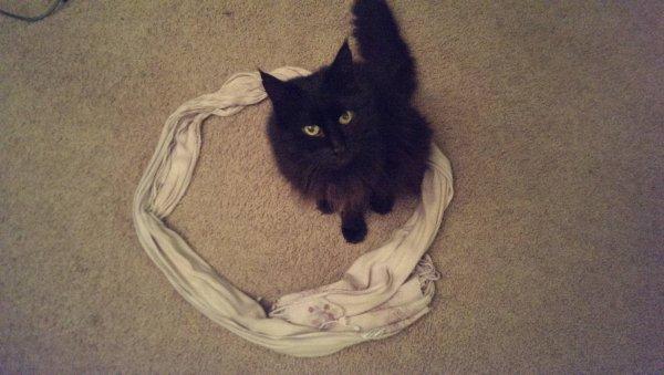 Интернет-эксперимент показал, что коты всегда садятся в круг