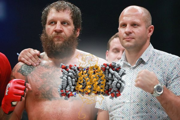 UFC и Гарвард ропчат: Причины победы братьев Емельяненко кроются в генетической мутации